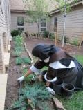 carmelite-enclosure-gardening