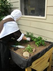 Sister planting new herb garden