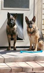 Zelie and Meika test their new dog door