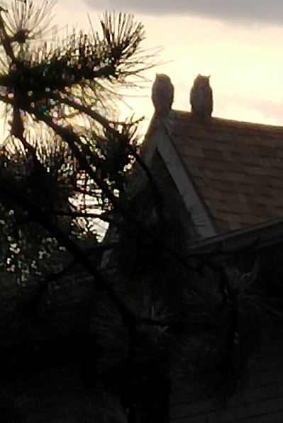 Owls on Chapel roof